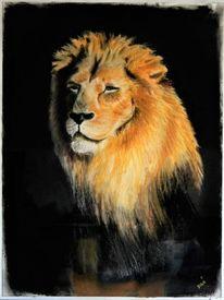 Wild, Tiere, Löwe, Zeichnungen