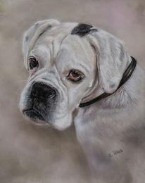 Boxer, Pastellmalerei, Weiß, Augen