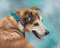 Hund, Pastellmalerei, Fell, Blau
