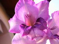 Blumen, Garten, Fotografie