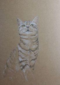 Zeichnung, Katze, Tiger, Tiere