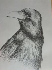 Vogel, Rabe, Schwarz, Weiß