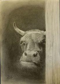 Kuh, Bleistiftzeichnung, Rind, Zeichnungen