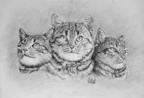 Katze, Bleistiftzeichnung, Tierportrait, Zeichnungen