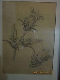 Weiß, Blumen, Schwarz, Zeichnungen