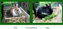 Kaninchen, Braun, Schwarz, Fotografie