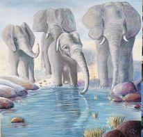Zoo, Freiheit, Natur, Elefant