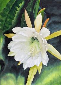 Weiß, Kaktus, Blüte, Aquarell