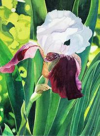 Blumen, Iris, Aquarellmalerei, Aquarell