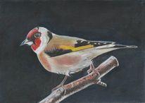 Stieglitz, Singvogel, Äste, Zeichnungen