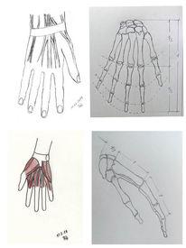 Finger, Skelett, Hand, Muskulatur