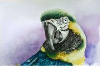 Papagei, Aquarell tiere, Tiere, Aquarellmalerei
