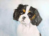 Aquarellmalerei, Tiere, Hund, Tierportrait