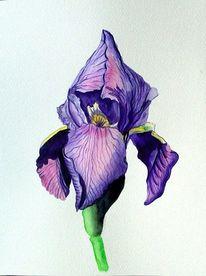 Blumen, Blau, Grün, Iris