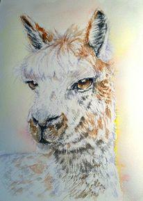 Tiere, Portrait, Wildtiere, Tierportrait