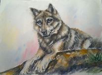 Wolf, Natur, Aquarellmalerei, Raubtier