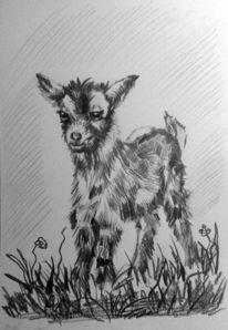 Zicklein, Schwarz, Wiese, Tierportrait