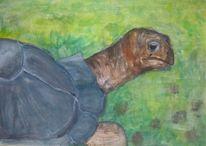 Grün, Malerei, Schildkröte, Natur