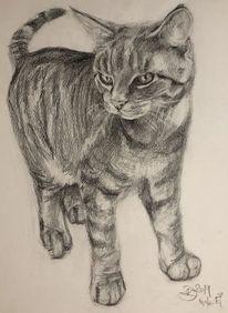 Katze, Skizze, Malerei, Tiere