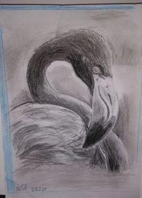 Vogel, Bleistiftzeichnung, Kohlezeichnung, Flamingo