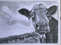 Kuh, Bleistiftzeichnung, Tiere, Zeichnungen