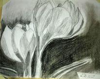 Pflanzen, Kohlezeichnung, Bleistiftzeichnung, Zeichnungen