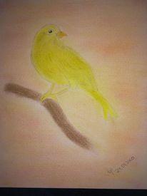 Vogel, Bleistiftzeichnung, Zeichnungen