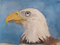 Gouachemalerei, Vogel, Adler, Aquarell