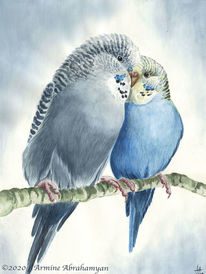 Budgerigars, Papagei, Wellensittiche, Tiere