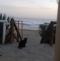 Brandung, Katze, Strand, Meer