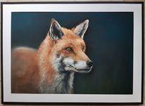 Fuchs, Pastellmalerei, Tierportrait, Zeichnungen