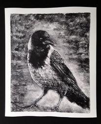 Monotypie, Vogel, Aaskrähe, Zeichnungen