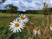 Herbst, Blumen, Pinnwand,