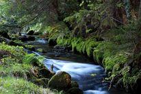 Bach, Wasser, Wald, Fotografie