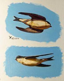 Portrait, Mehlschwalben, Tierwelt, Schwalbe