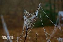 Spinnenweben, Spinnennetz, Wald, Tautropfen