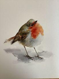 Natur, Aquarellmalerei, Rotkehlchen, Vogel