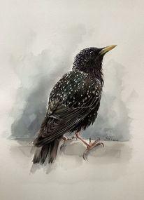 Vogel, Aquarellmalerei, Tiere, Stern