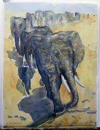 Herd, Aquarellmalerei, Anführer, Landschaft