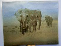 Savanne, Afrika, Kenia, Elefant