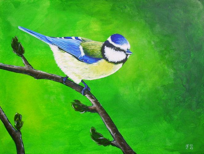 Grün, Äste, Knospe, Blaumeise, Vogel, Malerei