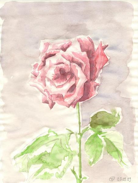 Stillleben, Acrylmalerei, Malerei, Rose