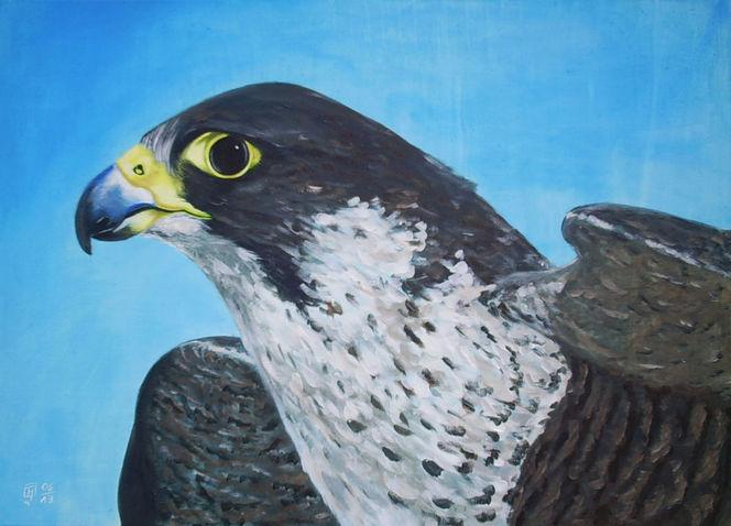 Schnabel, Falke, Augen, Feder, Flügel, Himmel