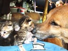 Retten, Katze, Tyson, Pinnwand