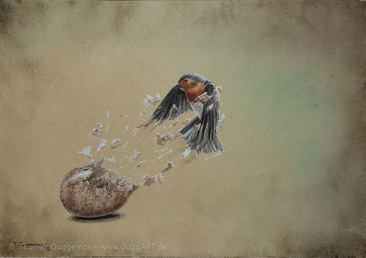 Rotkehlchen, Malerei, Vogel, Anfang, Ei, Gemälde