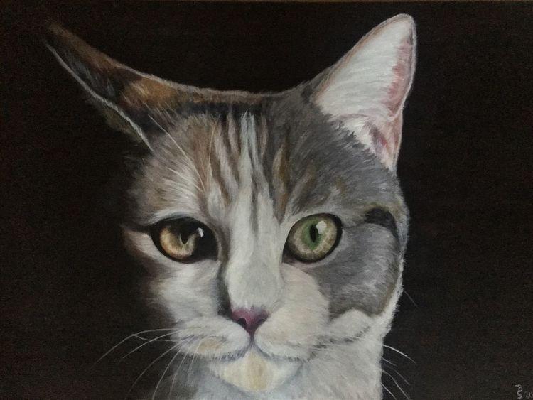 Haustier, Vierbeiner, Fell, Katze, Augen, Malerei