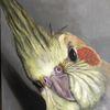 Pinsel, Papagei, Vogel, Farben