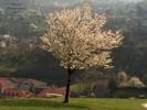 Bellinzona, Baum, Frühjahr, Landschaft