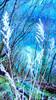 Blau, Gras, Fotografie