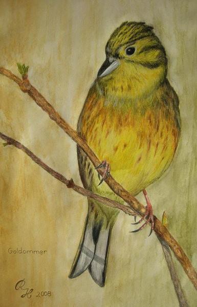 Vogel, Goldammer, Zeichnungen, Stillleben, Garten,
